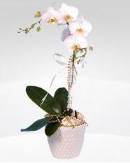 1 dallı orkide saksı çiçeği  Adana online çiçekçi , çiçek siparişi