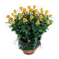 Adana cicekciler , cicek siparisi  10 adet sari gül tanzim cam yada mika vazoda çiçek