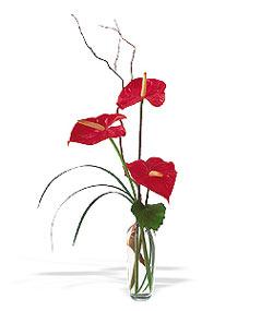 Adana çiçek siparişi sitesi  cam yada mika Vazoda 3 adet  antoryum