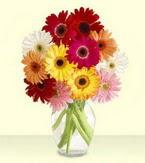 Adana çiçek yolla , çiçek gönder , çiçekçi   cam yada mika vazoda 15 özel gerbera