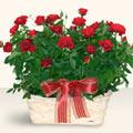 Adana İnternetten çiçek siparişi  11 adet kirmizi gül sepette