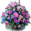 karisik mevsim kir çiçekleri  Adana çiçek gönderme sitemiz güvenlidir