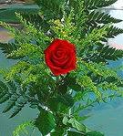 1 adet kirmizi gül buketi   Adana çiçek siparişi vermek
