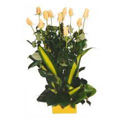 12 adet beyaz gül aranjmani  Adana kaliteli taze ve ucuz çiçekler