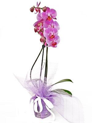 Adana anneler günü çiçek yolla  Kaliteli ithal saksida orkide