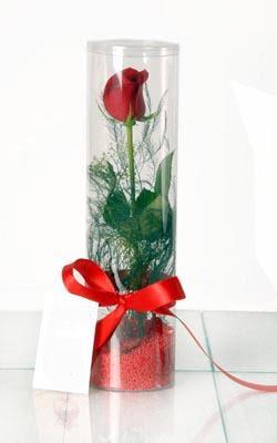Adana çiçek yolla  Silindir vazoda tek kirmizi gül
