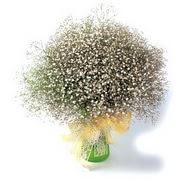 Adana çiçek mağazası , çiçekçi adresleri  cam yada mika vazo içerisinde cipsofilya demeti