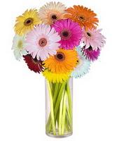 Adana internetten çiçek siparişi  Farkli renklerde 15 adet gerbera çiçegi