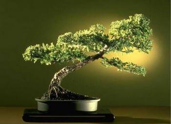ithal bonsai saksi çiçegi  Adana çiçekçi mağazası