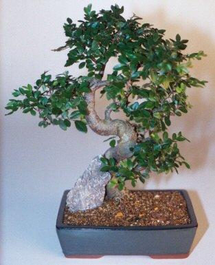 Adana çiçek gönderme sitemiz güvenlidir  ithal bonsai saksi çiçegi  Adana çiçek siparişi sitesi