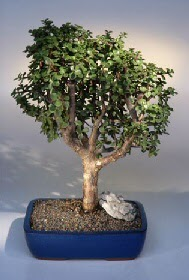 Adana çiçek gönderme  ithal bonsai saksi çiçegi  Adana çiçekçiler