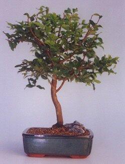 Adana ucuz çiçek gönder  ithal bonsai saksi çiçegi  Adana anneler günü çiçek yolla