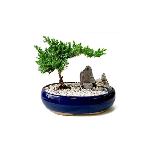 ithal bonsai saksi çiçegi  Adana çiçek gönderme