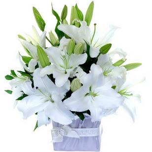 Adana çiçek yolla  2 dal cazablanca vazo çiçeği