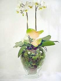 Adana çiçek satışı  Cam yada mika vazoda özel orkideler