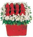 Adana çiçek gönderme  Kare cam yada mika içinde kirmizi güller - anneler günü seçimi özel çiçek