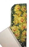 Adana çiçek gönderme  Kutu içerisine dal cymbidium orkide