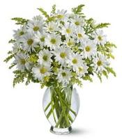 Vazo içerisinde beyaz krizantem çiçekleri  Adana çiçekçi mağazası