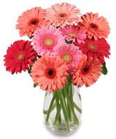 vazo içerisinde 13 adet gerbera çiçeği  Adana çiçek siparişi sitesi