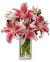 Vazo içerisinde 5 dal kazablanka çiçeği  Adana cicekciler , cicek siparisi