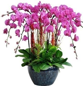9 dallı mor orkide  Adana 14 şubat sevgililer günü çiçek