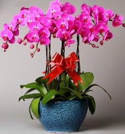 7 dallı mor orkide  Adana çiçek online çiçek siparişi