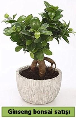 Ginseng bonsai japon ağacı satışı  Adana çiçekçi telefonları