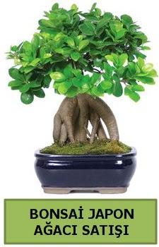 Bonsai japon ağacı satışı  Adana çiçek satışı