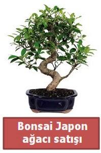 Japon ağacı bonsai satışı  Adana çiçek siparişi sitesi
