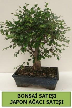Minyatür bonsai japon ağacı satışı  Adana çiçek gönderme sitemiz güvenlidir