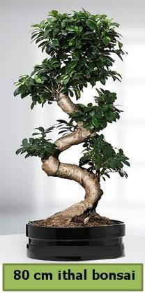80 cm özel saksıda bonsai bitkisi  Adana çiçekçi telefonları