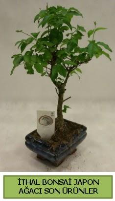 İthal bonsai japon ağacı bitkisi  Adana hediye sevgilime hediye çiçek