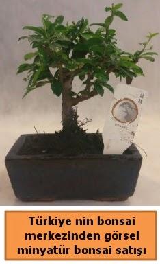 Japon ağacı bonsai satışı ithal görsel  Adana çiçek yolla