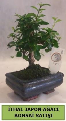 İthal japon ağacı bonsai bitkisi satışı  Adana çiçekçi telefonları