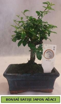 Minyatür bonsai ağacı satışı  Adana çiçek gönderme