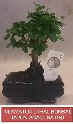 Küçük görsel bonsai japon ağacı bitkisi  Adana çiçek , çiçekçi , çiçekçilik
