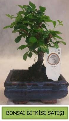 Bonsai ithal görsel minyatür japon ağacı  Adana ucuz çiçek gönder