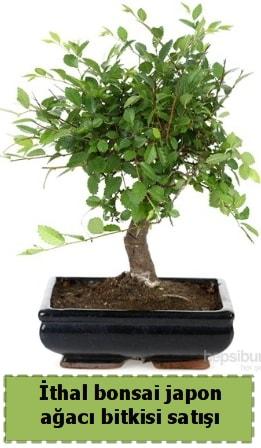 İthal bonsai saksı çiçeği Japon ağacı satışı  Adana İnternetten çiçek siparişi