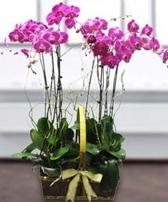 7 dallı mor lila orkide  Adana çiçek gönderme sitemiz güvenlidir
