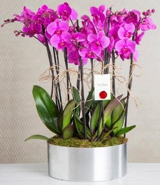 11 dallı mor orkide metal vazoda  Adana çiçek gönderme sitemiz güvenlidir