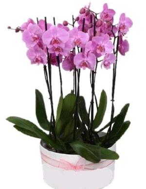 Beyaz seramik içerisinde 7 dallı mor orkide  Adana çiçekçi telefonları