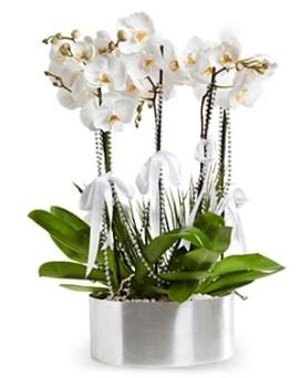Beş dallı metal saksıda beyaz orkide  Adana çiçek yolla