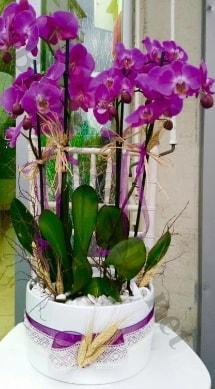 Seramik vazoda 4 dallı mor lila orkide  Adana online çiçek gönderme sipariş