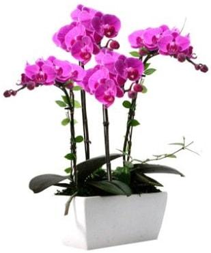 Seramik vazo içerisinde 4 dallı mor orkide  Adana çiçek satışı