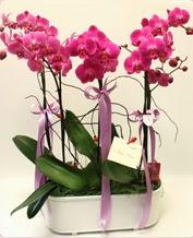 Beyaz seramik içerisinde 4 dallı orkide  Adana ucuz çiçek gönder