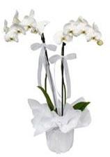 2 dallı beyaz orkide  Adana güvenli kaliteli hızlı çiçek