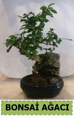 Bonsai ağacı japon ağacı satışı  Adana hediye çiçek yolla