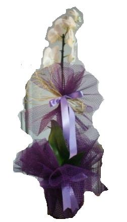 Tek dallı beyaz orkide süper kalite ithal  Adana çiçek siparişi sitesi