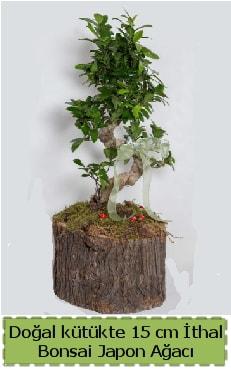 Doğal kütükte İthal bonsai japon ağacı  Adana çiçek gönderme
