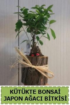 Kütük içerisinde doğal bonsai ağacı  Adana çiçekçi telefonları